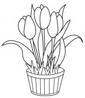 Тюльпаны в кадке