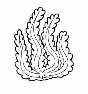 Рисунок водоросли