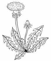 Картинка Растение