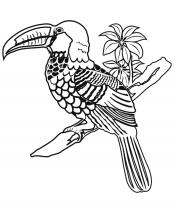 Тукан с цветком
