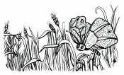Пшеница и бабочка