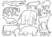Раскраска животные жарких стран