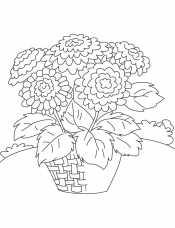 Хризантемы в корзинке
