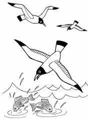Морские чайки