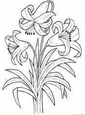 Букет лилий