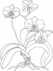 Орхидея на земле