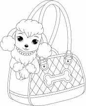 Раскраска Пудель в сумке