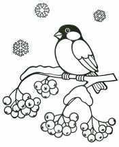 Снегирь зимой