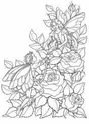Розы из Дюймовочки