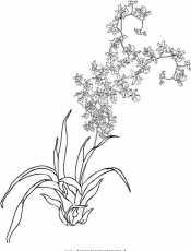 Большая орхидея