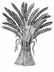 Раскраска Пшеница