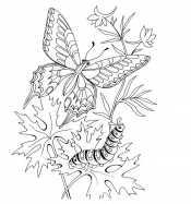 Гусеница и бабочка