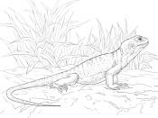 Игуана в траве