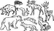 Картинка Лесные животные