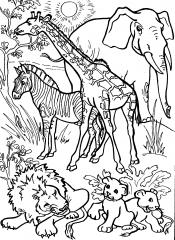 Рисунок животные жарких стран
