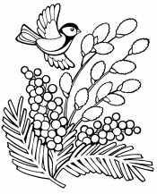 Мимоза и птица