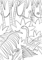 Джунгли пальмы