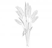 Картинка Пшеница