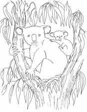 Коалы в листьях