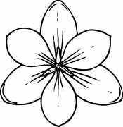 Раскраски цветы крупные