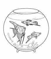 Рыбки для девочек