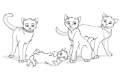 Прекрасные коты воители