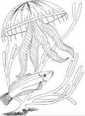Медуза и рыбка
