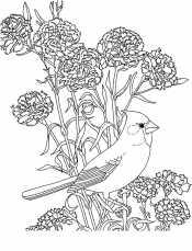 Гвоздика и птица