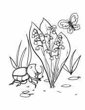 Ландыш и жук