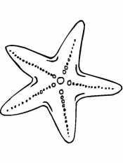 Морская звездочка