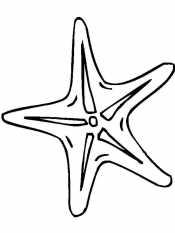 Морская звезда для детей