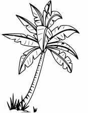 Картинка Пальма