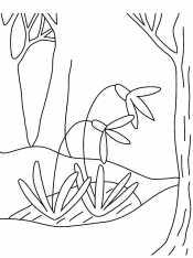 Подснежник в лесу