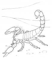 Скорпион в пустыне