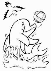 Дельфин играет