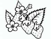 Клубника с цветочками