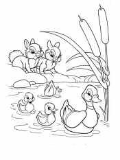 Утята и зайчата