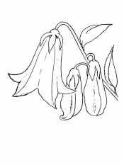 Рисунок Колокольчик