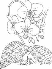 Картинка Орхидея