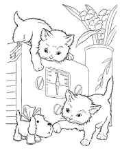 Картинка кошка и сабака