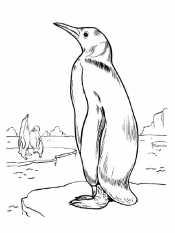 Один пингвин