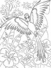 Попугай для детей