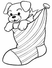 Собака в носке