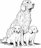 Семейство лабрадоров