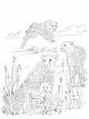 Гепарды на воле
