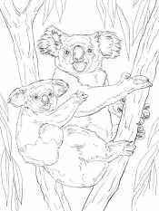 Коала с деткой