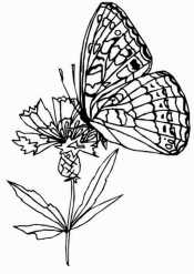 Бабочка на цветочке