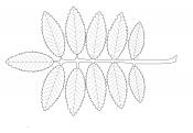 Лист рябины