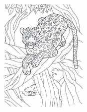 Джунгли леопард