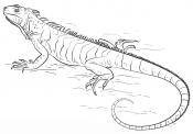 Большая ящерица